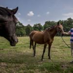 site paarden